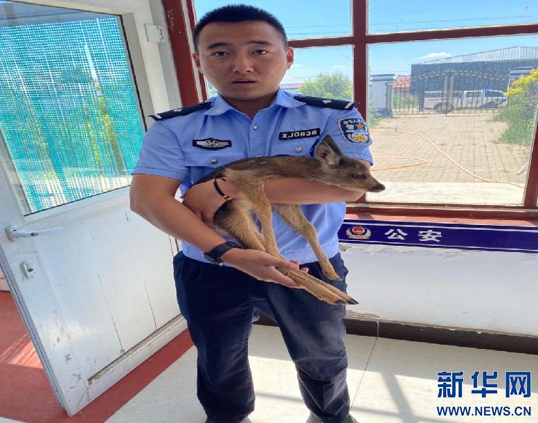 警民联手救助野生动物 共筑和谐自然