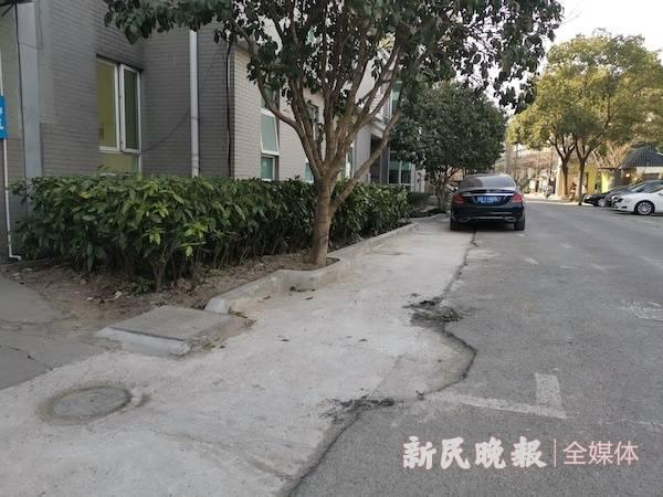 路边绿化带都成了停车位.jpg