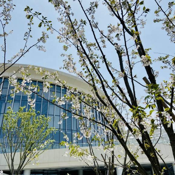 """沪上各大剧院暂不对外开放 远郊的这座森林剧场带你""""云踏青"""""""