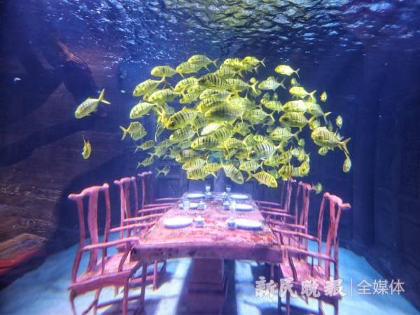 """与海洋里的鱼类打招呼、拯救乐高世界的公主…… 探访""""网红景点""""带你""""玩转普陀"""""""