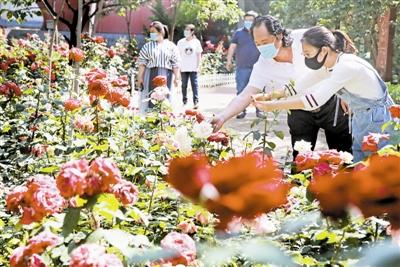 社区花满园 屋内闻花香