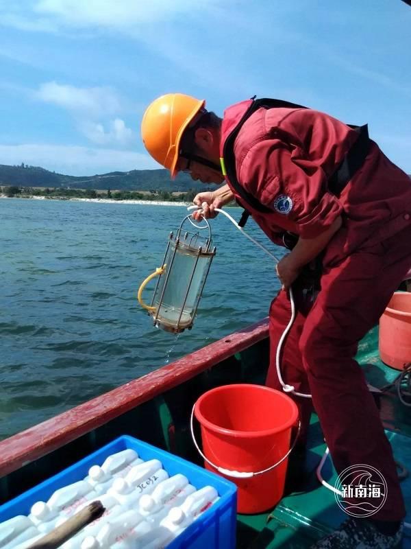 《【杏耀平台登录入口】自然资源部南海局完成海草床生态系统试点调查》