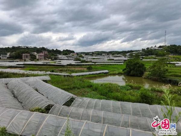 邵東牛馬司百年煤城變美城 農業升級四季瓜