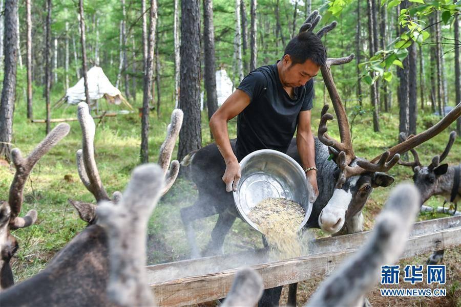 (新华全媒头条·走向我们的小康生活·图文互动)(2)走出山林奔小康——鄂温克族迎来新生活