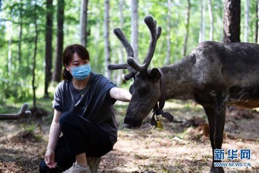 《【杏耀登陆地址】走向我们的小康生活|走出山林奔小康——鄂温克族迎来新生活》