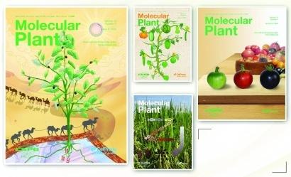 位列世界第二的《分子植物》为何如此珍视中国研究