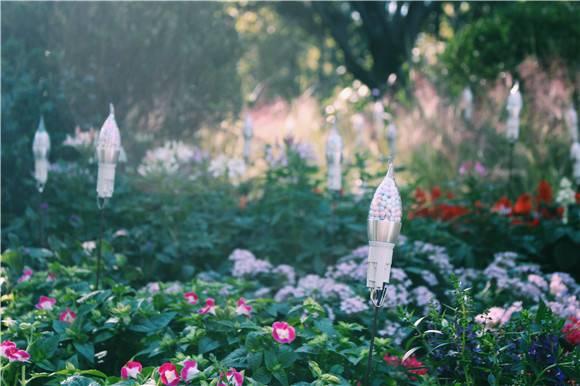 上海植物园秋季花展高清剧透 国庆长假安排上