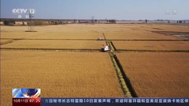 丰收啦!富硒水稻、机收玉米......南北各地抢收快收正当时