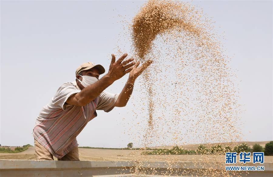 (國際)(2)世界糧食日:維護全球糧食安全 世界各國休戚與共