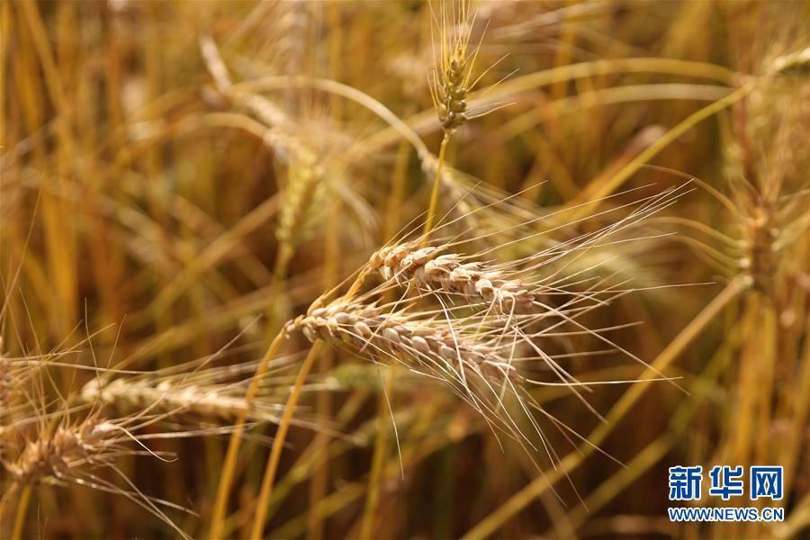 (國際)(4)世界糧食日:維護全球糧食安全 世界各國休戚與共