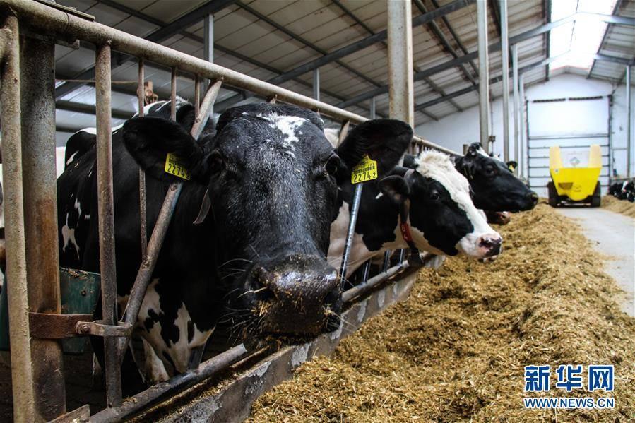 """(国际)(10)出口中国""""备战""""双十一的波兰牛奶"""