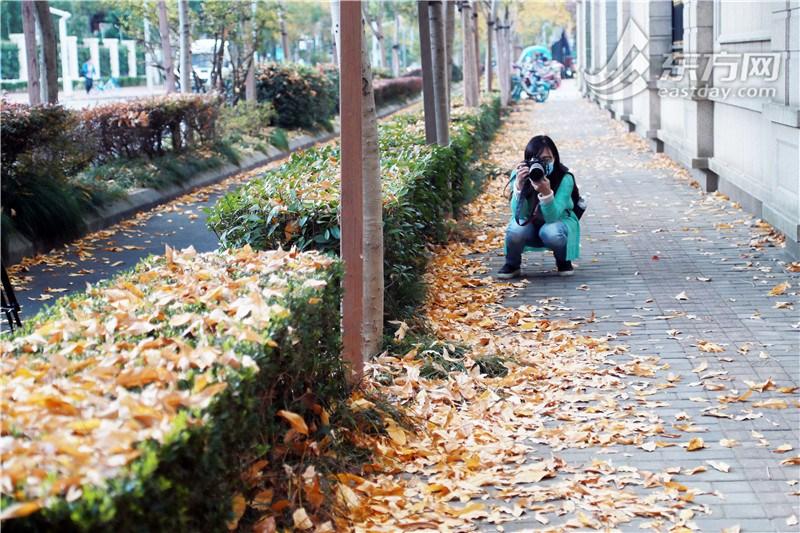 """落叶不扫景观道""""金地毯""""初现 留住秋天最"""