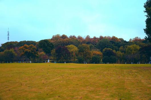 美爆了!闵行这座公园惊艳了整个秋天,每一帧都是大片~