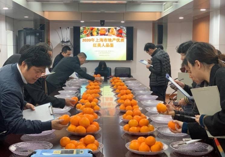 """网红柑桔""""红美人"""" 上海引进品种多年科技攻关""""结硕果"""",即将上市"""