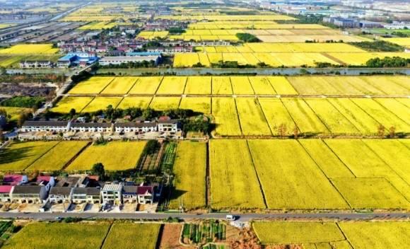 全市农业用水节约10%!上海农业水价综合改革收官 :204万亩农田全面完成