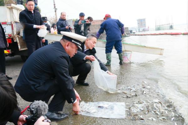 黃浦江上游松江段增殖放流十余萬尾魚苗 為