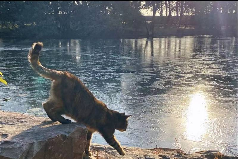 """猫咪也要凿冰捕鱼?申城公园现""""冰河""""奇景 打冰漂凿冰盖, 都乐得像个孩子"""