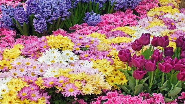 情人节你买花了吗?全球鲜切花市场回暖