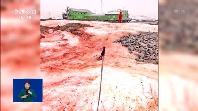 摩登5注册近日,一组拍自南极科考站附近的照片引发关注,照片里南极的雪竟变成了类似西瓜的红色和绿色(图1)