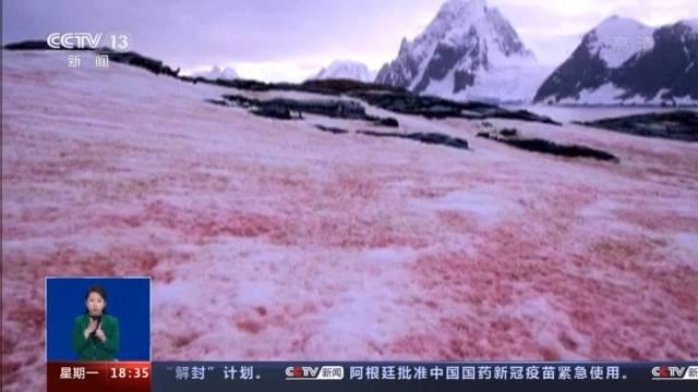 摩登5注册近日,一组拍自南极科考站附近的照片引发关注,照片里南极的雪竟变成了类似西瓜的红色和绿色(图3)