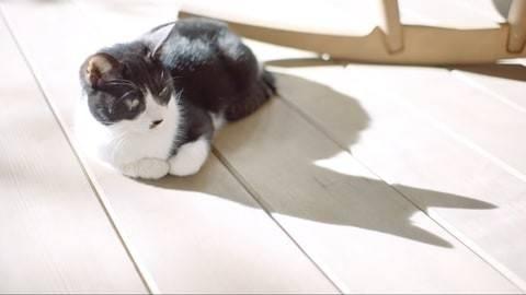 """摩登6平台3月22日,任天堂发布了新垣结衣出演的《集合啦!动物森友会》的新电视广告""""我的设计篇""""(图3)"""