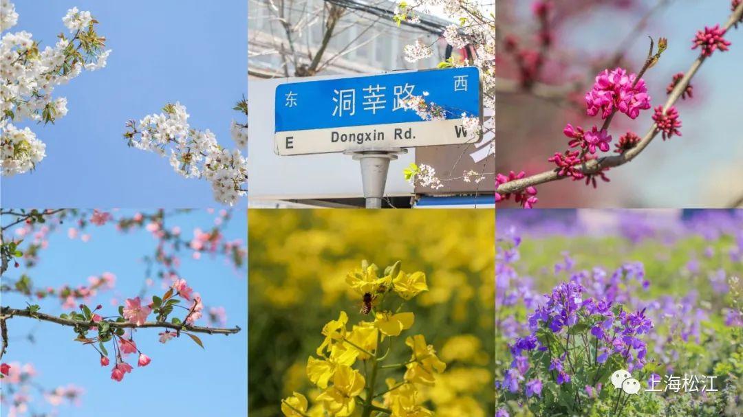 松江这个小镇已经美得不像话,你还没来过吗?