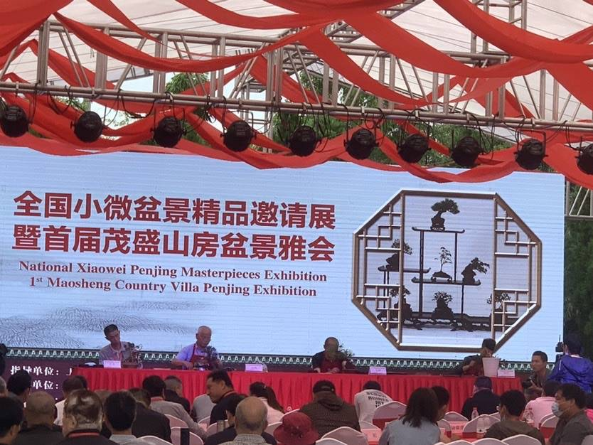 """全国小微盆景邀请展在上海松江举行 百余组作品展现""""诗画""""意境"""