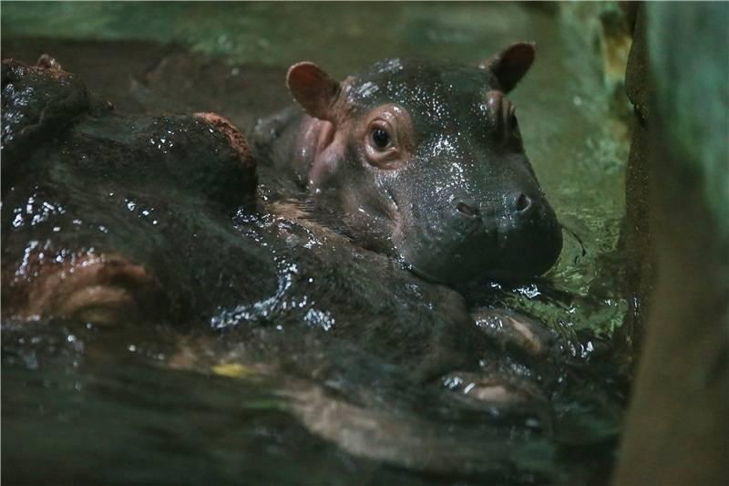 想好怎么带娃过六一了吗?上海动物园萌宝大集合,看动物世界溜娃秘笈
