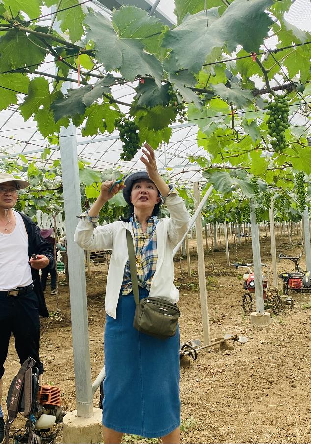 怀揣生态农业梦:年逾七旬赵何琍琍十年垦荒艰辛路