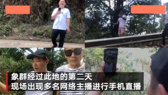 """云南大象集体迁移引关注 肇事数百起仍吓不退""""网络主播"""""""
