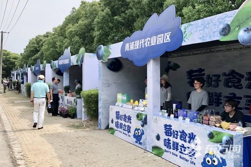 """青浦""""蓝莓采摘季""""如约而至!还将种植艺术稻田向建党百年献礼"""