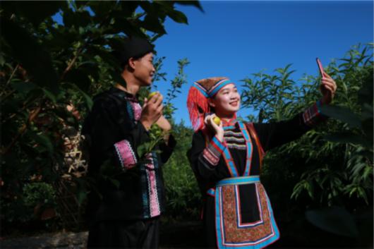 沙洲村瑶族青年正在果园直播黄金奈李