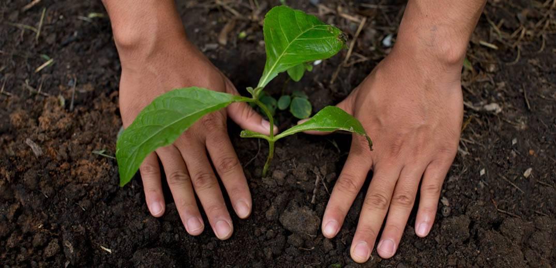 雀巢公布支持向可再生食物体系转型的计划