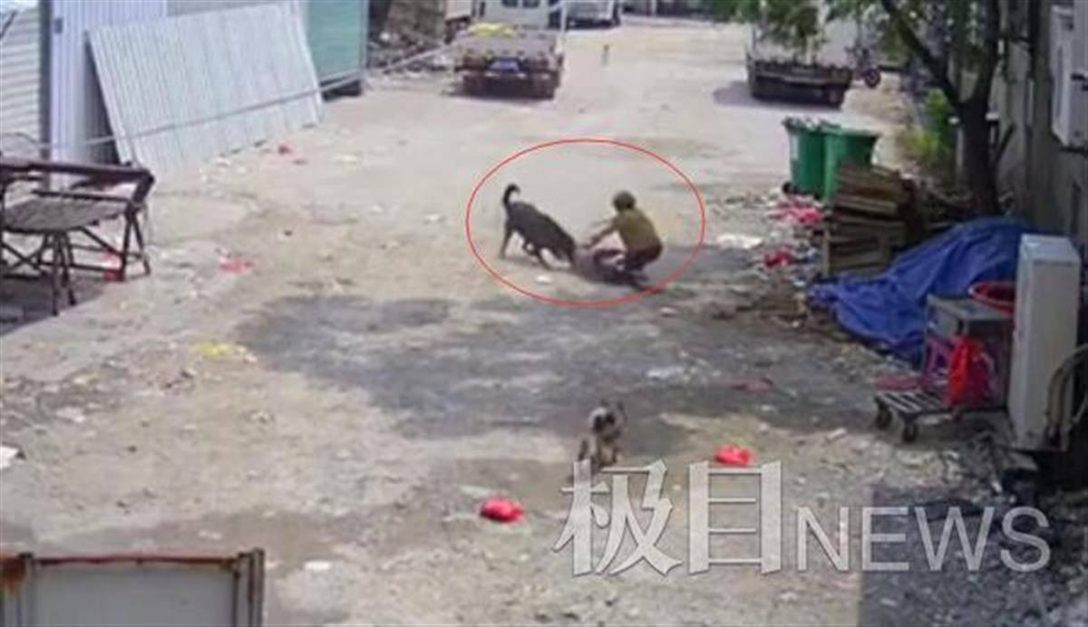 福建一老人被恶犬咬伤身亡:当地调查,肇事犬仍在酒楼养着