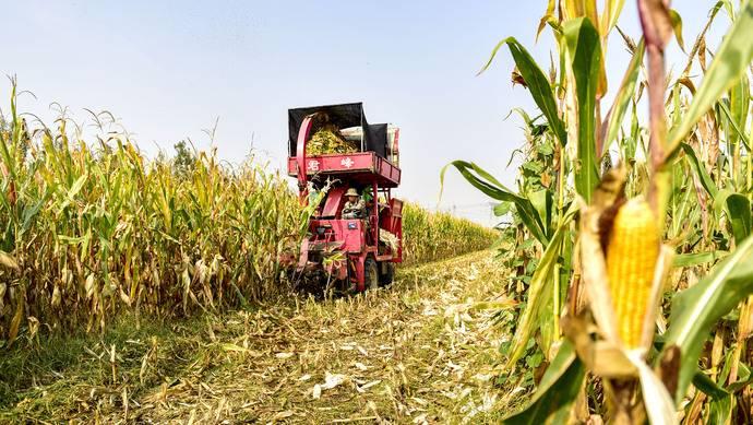 气候变化,玉米会因此减产吗?