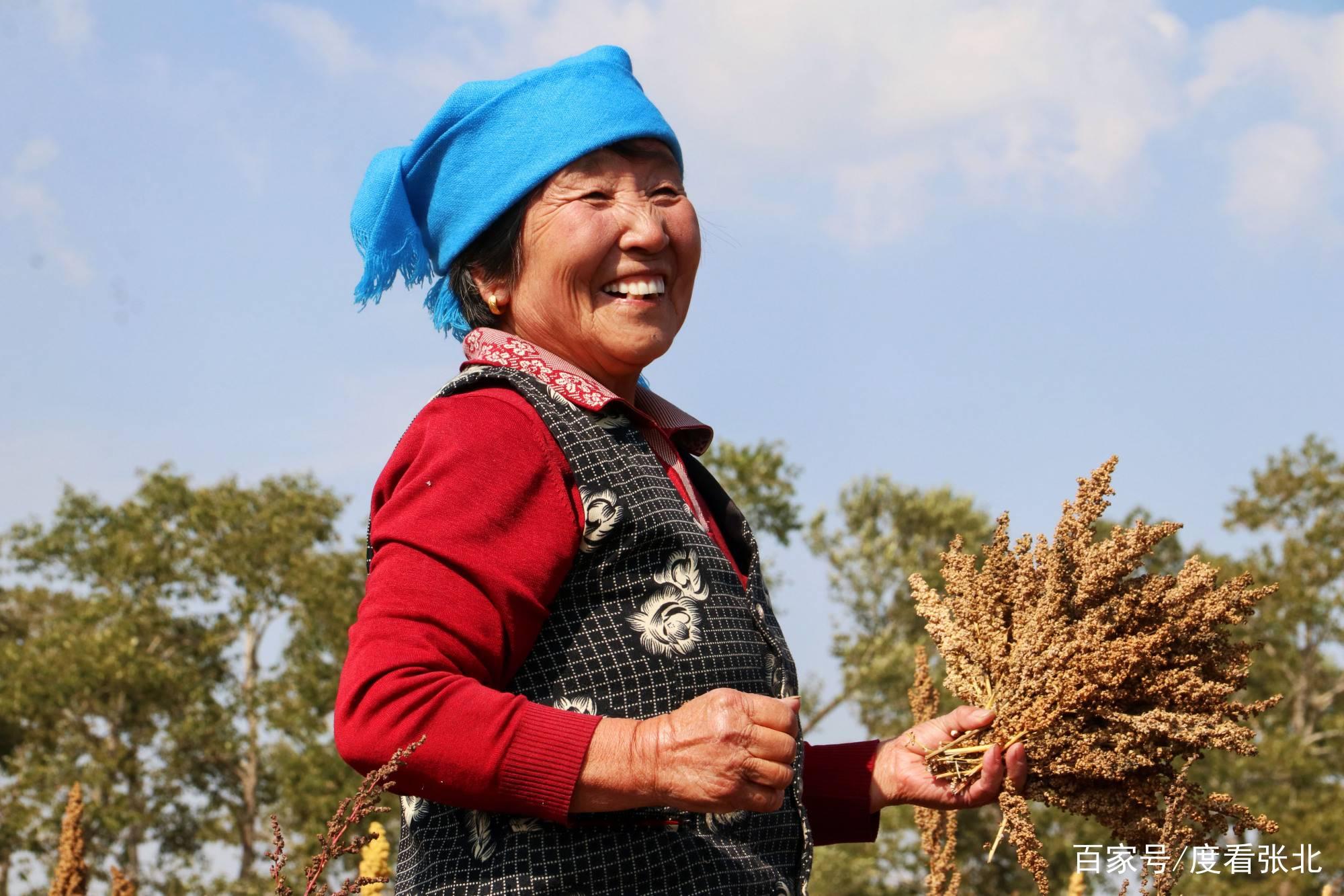 影像记录 河北张北:玉狗粱村秋季忙 金黄藜麦喜丰收