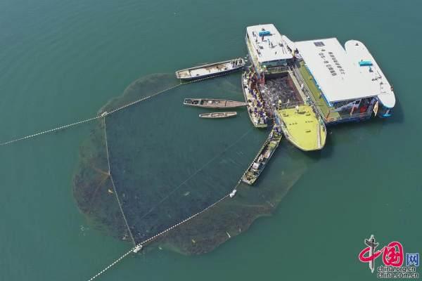 一网12万斤 千岛湖巨网捕鱼唱响丰收之歌[组图]